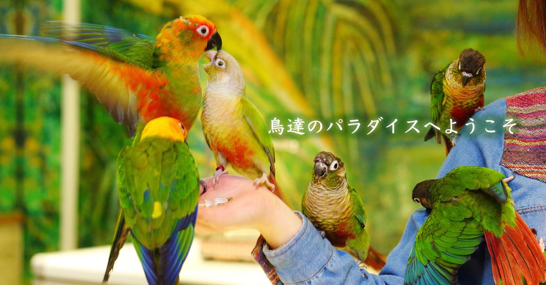 鳥達のパラダイスへようこそ