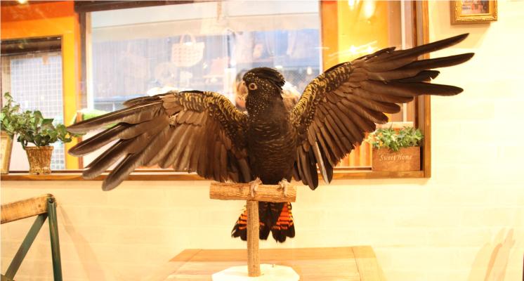 birdstaff