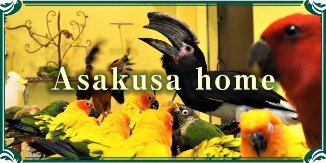鳥のいるカフェ浅草店HPへ
