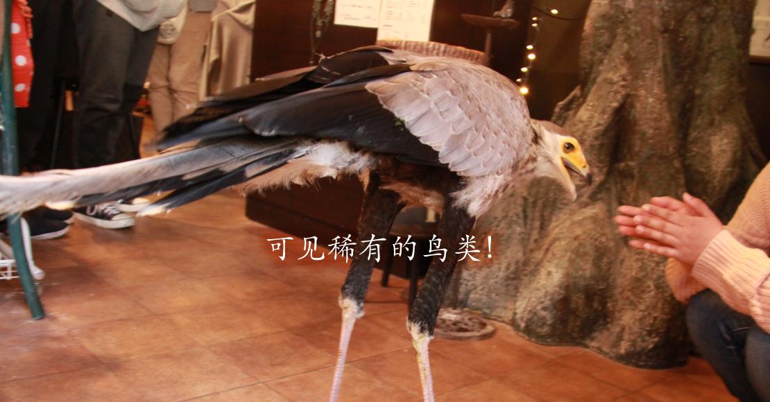 可以看到飞行的猫头鹰在你身边