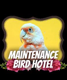 护理 鸟类酒店