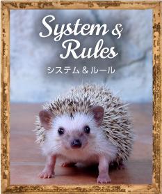 システム&ルール