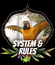 システム ルール