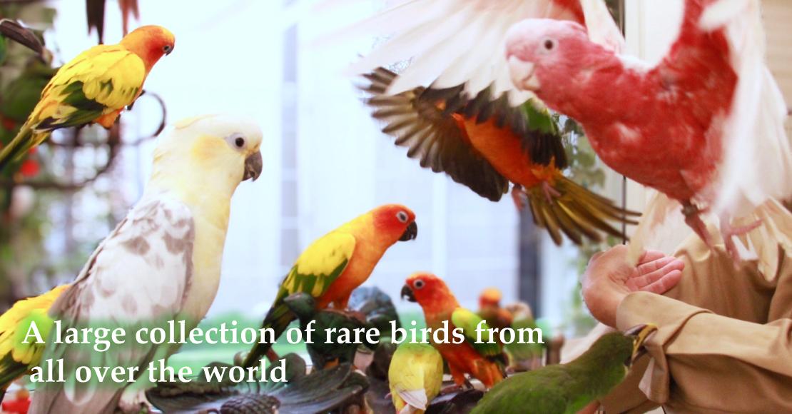 世界中の珍しい鳥が大集合