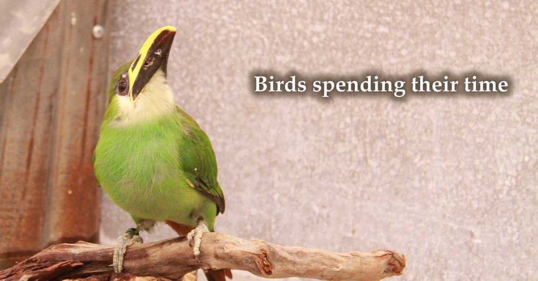 思い思いに過ごす鳥たち