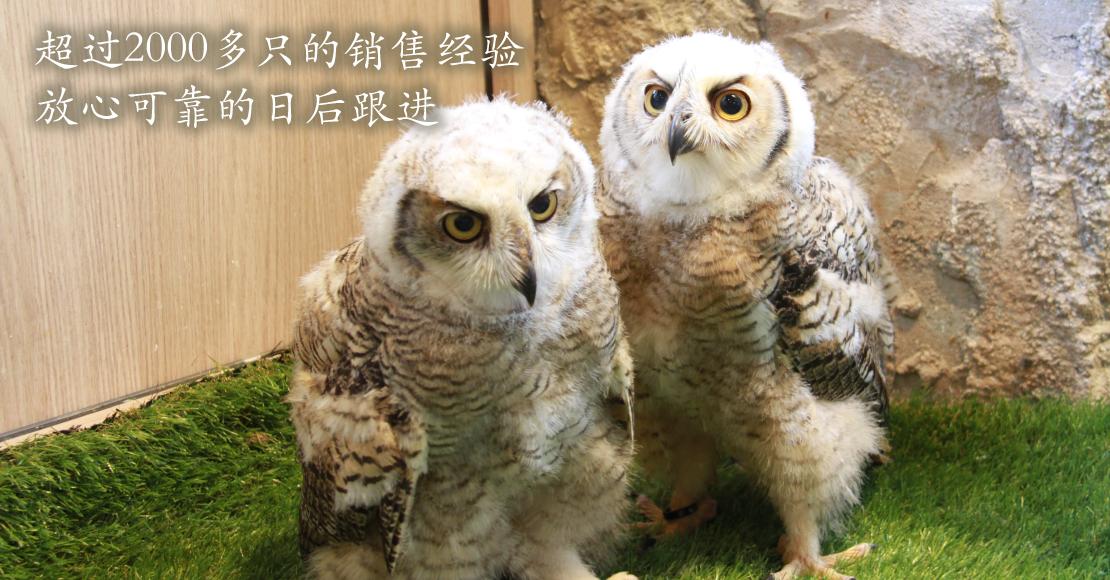 由哺乳动物至稀有鸟类都交给我们吧