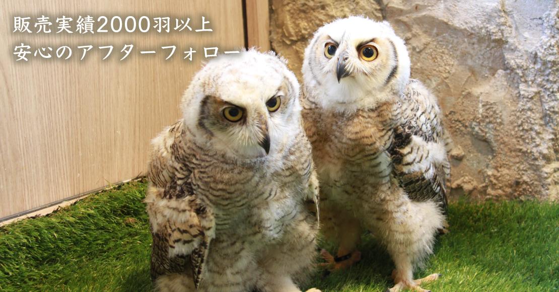 珍しい鳥類や哺乳類ならお任せください。